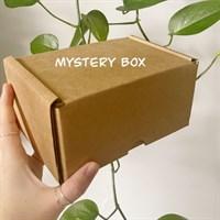 £25 Plant Pot Mystery Box