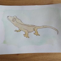 Crested Gecko A5 watercolour painting