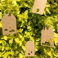 Nature Themed Mini Gift Tags 12 Tag Set
