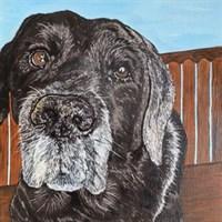 "Pet Portraits 8""x8"" - Commission Based"