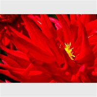 Photographic Art Print 'Striking Fire' whole image gallery shot 4