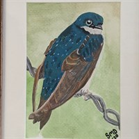 Tree Swallow Watercolour Painting