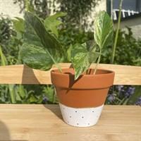 White polka dot 11cm terracotta planter gallery shot 2